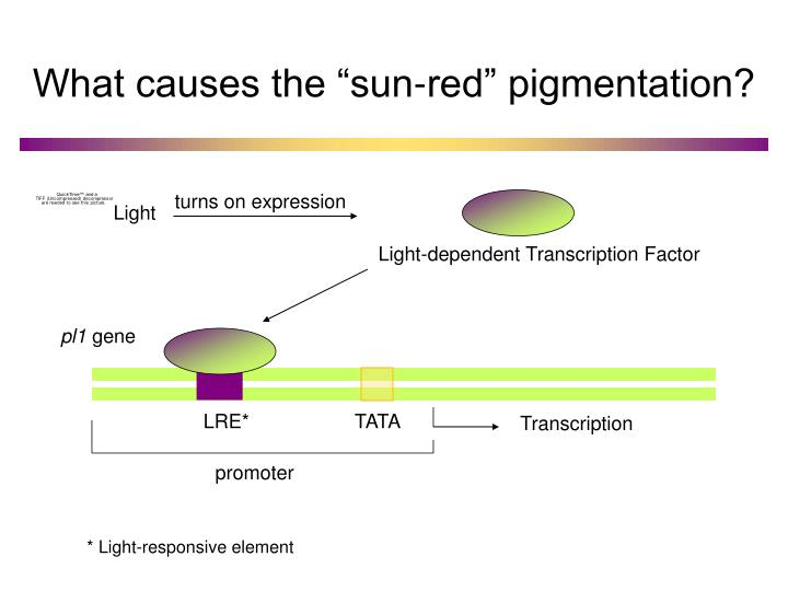 "What causes the ""sun-red"" pigmentation?"