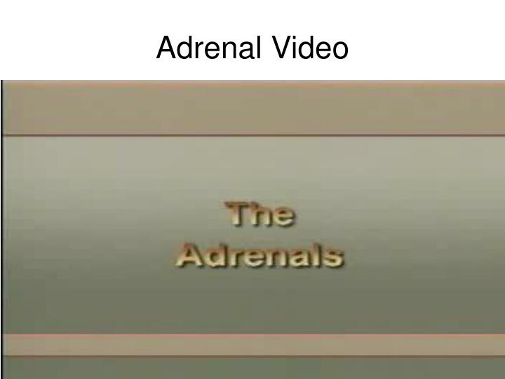 Adrenal Video
