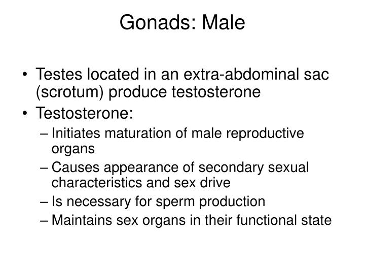 Gonads: Male