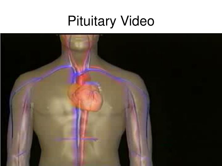 Pituitary Video