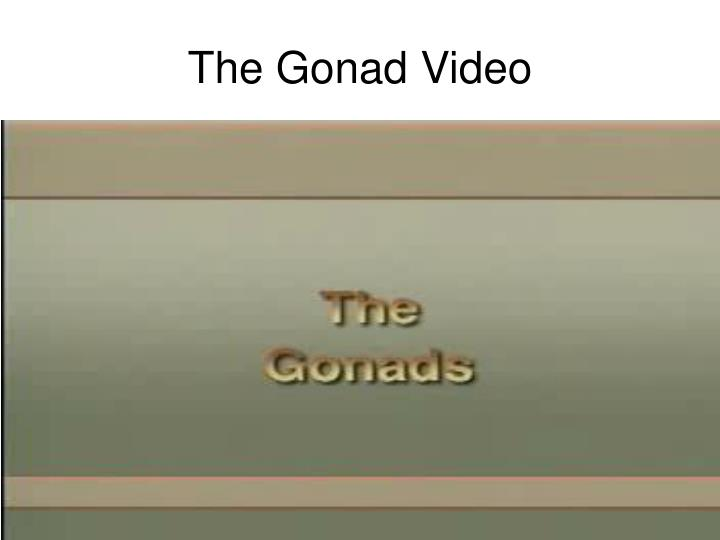 The Gonad Video
