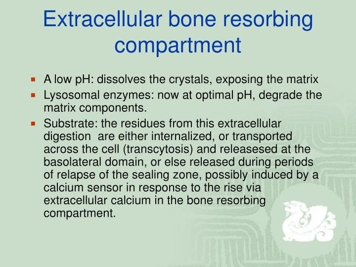 Extracellular bone resorbing compartment