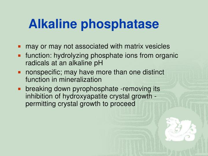 Alkaline phosphatase
