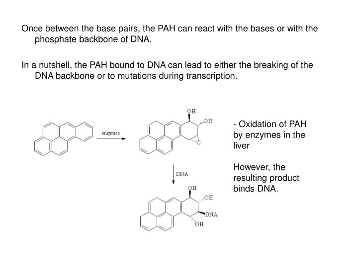 Once between the base pairs, the PAH can react with the bases or with the phosphate backbone of DNA.