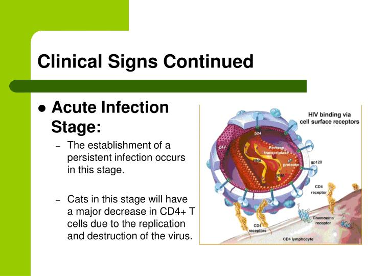 Clinical Signs Continued