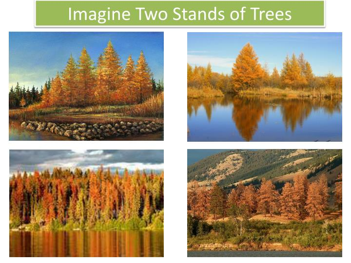 Imagine Two Stands of Trees