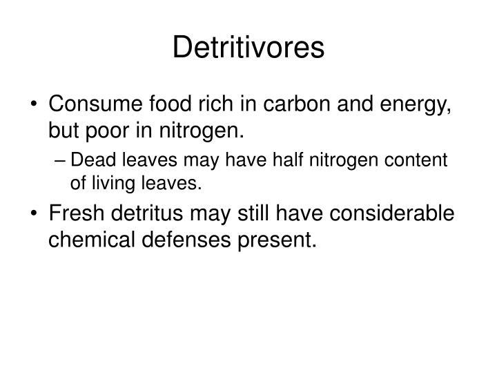 Detritivores