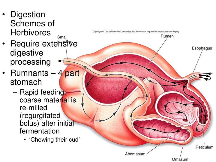 Digestion Schemes of Herbivores