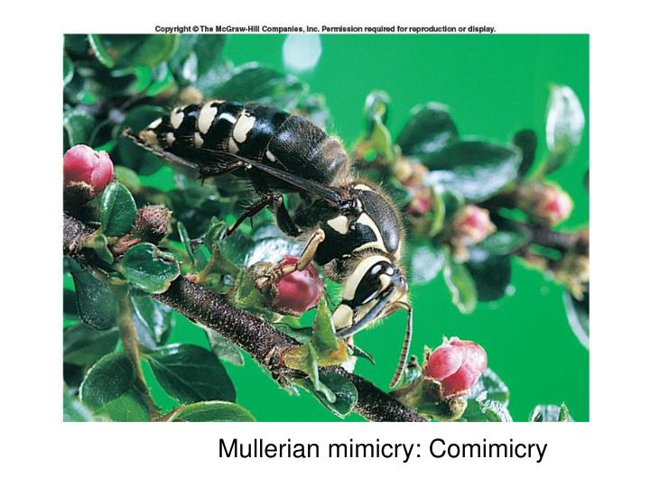 Mullerian mimicry: Comimicry