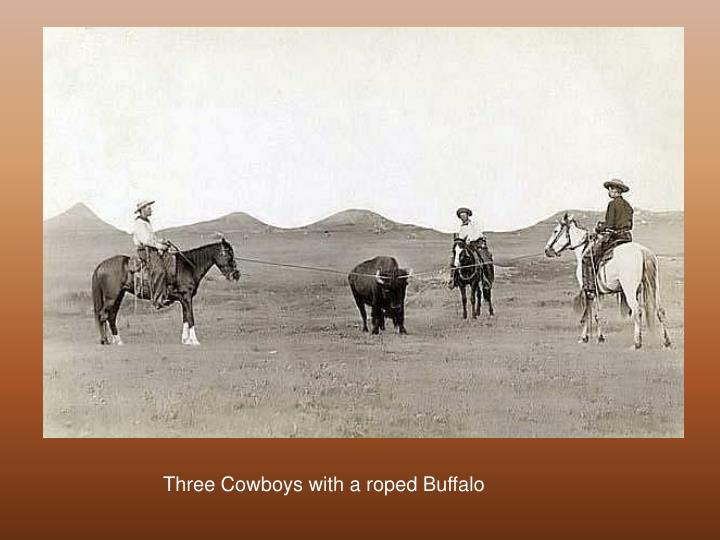 Three Cowboys with a roped Buffalo