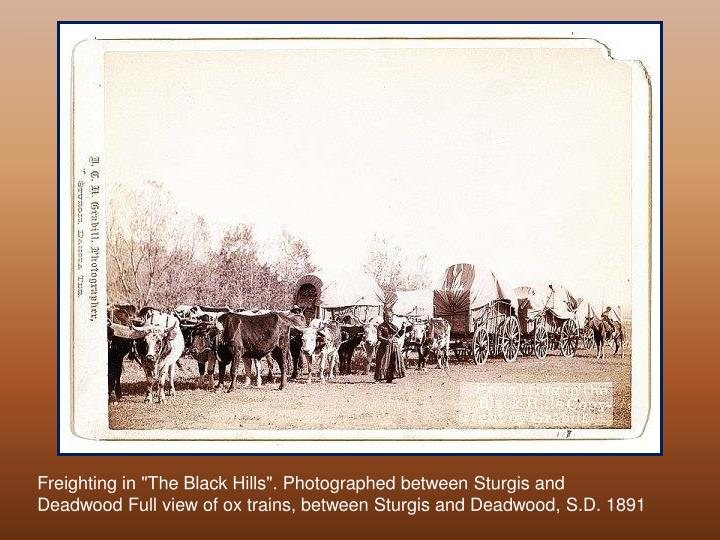 "Freighting in ""The Black Hills"". Photographed between Sturgis and Deadwood Full view of ox trains, between Sturgis and Deadwood, S.D. 1891"