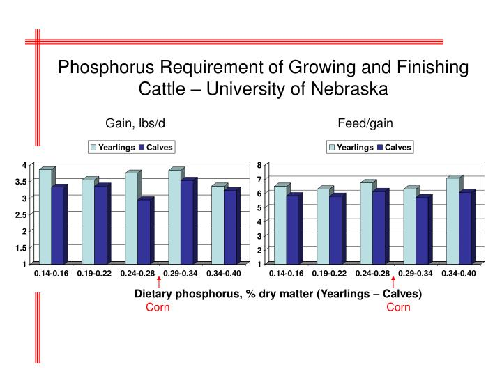 Phosphorus Requirement of Growing and Finishing Cattle – University of Nebraska