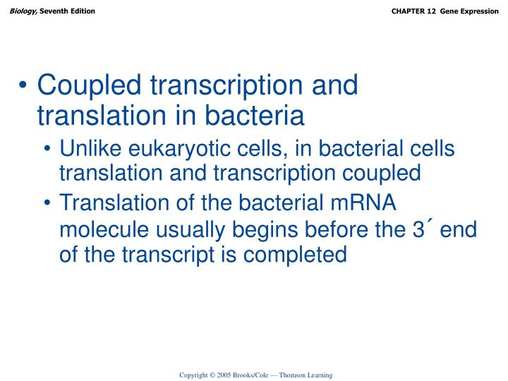 Coupled transcription and translation in bacteria