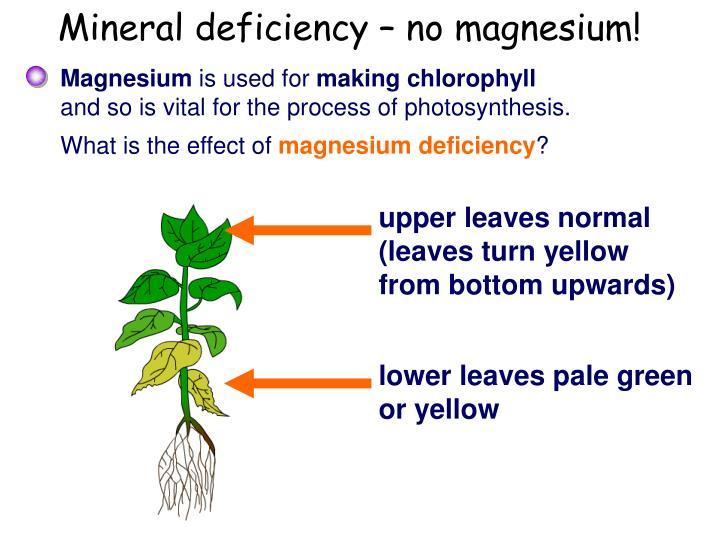 Mineral deficiency – no magnesium!