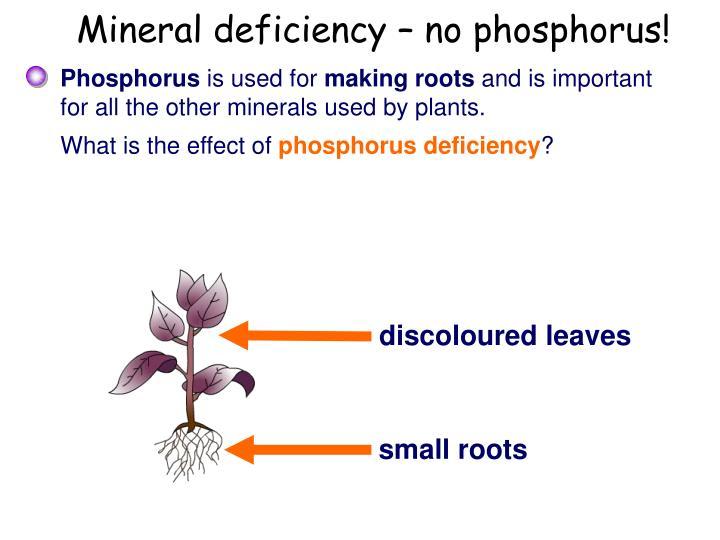 Mineral deficiency – no phosphorus!