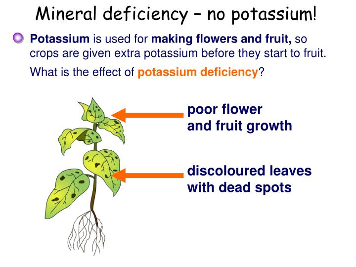 Mineral deficiency – no potassium!