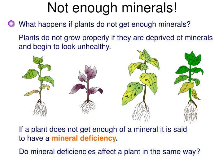 Not enough minerals!