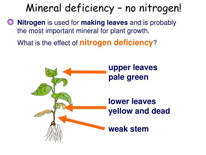 Mineral deficiency – no nitrogen!