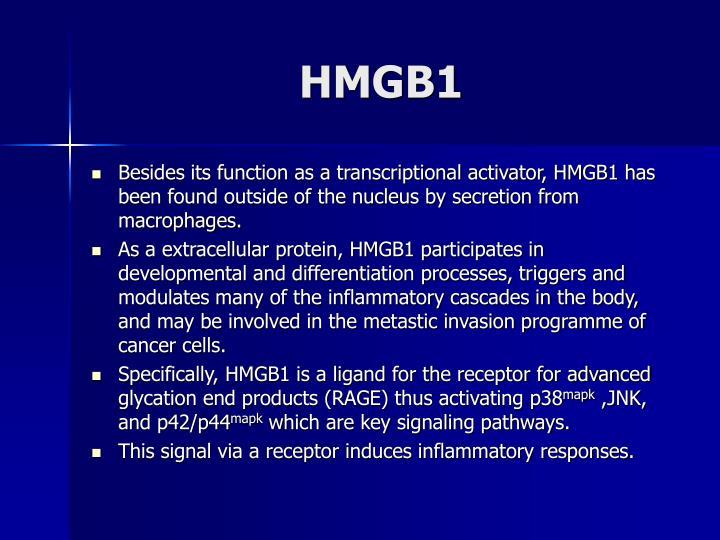 HMGB1