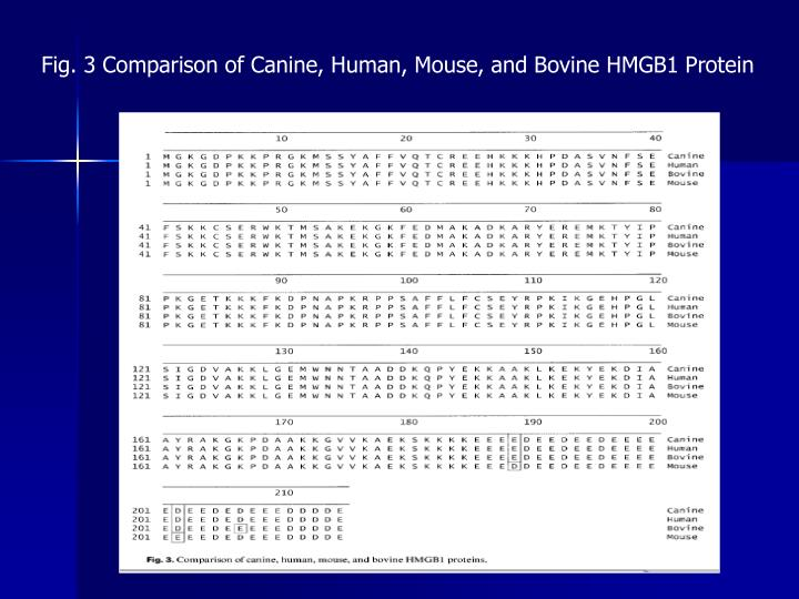 Fig. 3 Comparison of Canine, Human, Mouse, and Bovine HMGB1 Protein