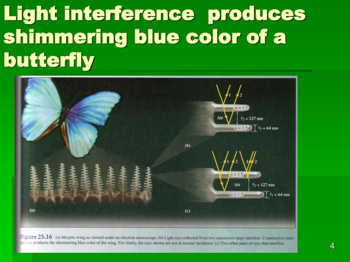 Light interference  produces shimmering blue color of a butterfly