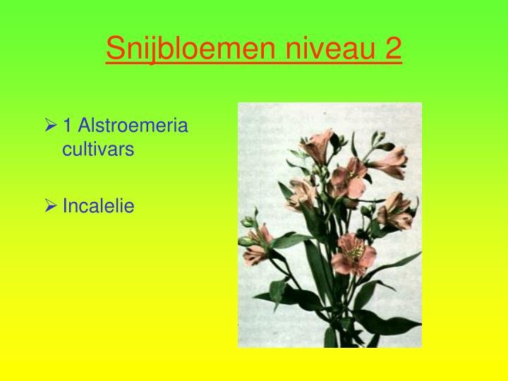 1 Alstroemeria cultivars