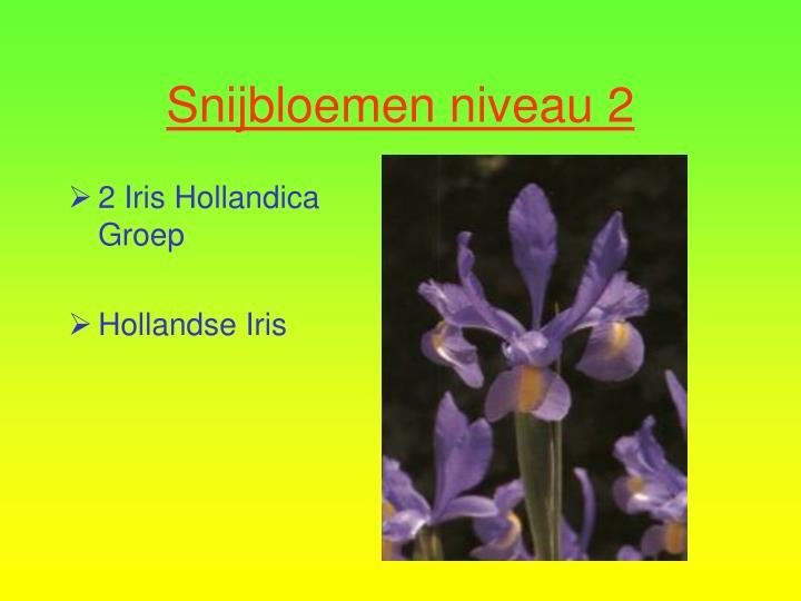 2 Iris Hollandica Groep