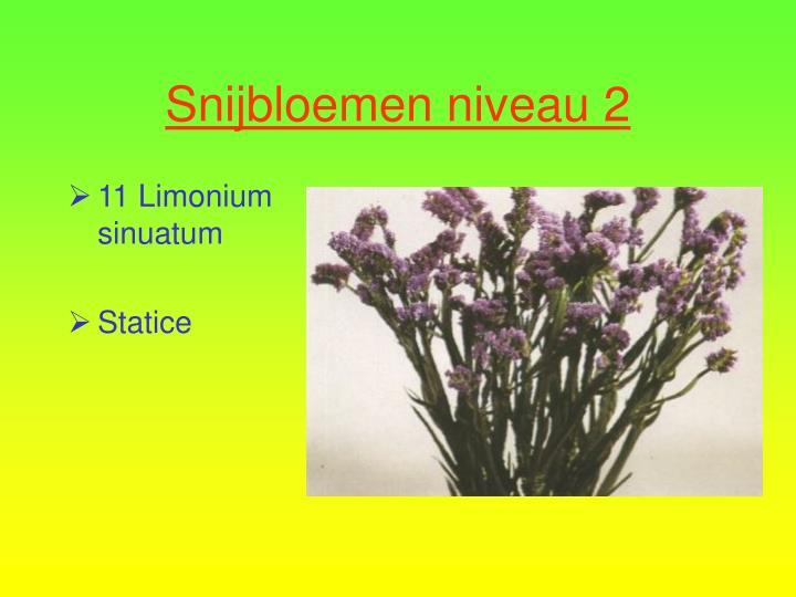 11 Limonium sinuatum
