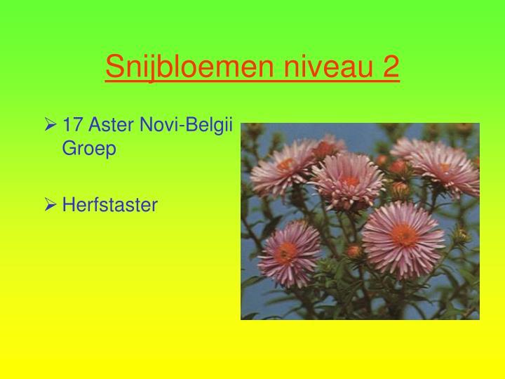 17 Aster Novi-Belgii Groep