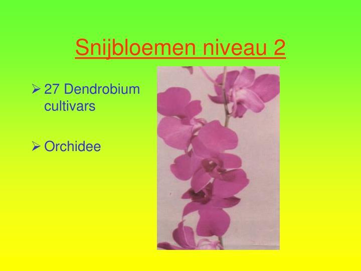 27 Dendrobium cultivars