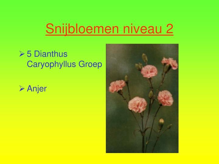 5 Dianthus Caryophyllus Groep