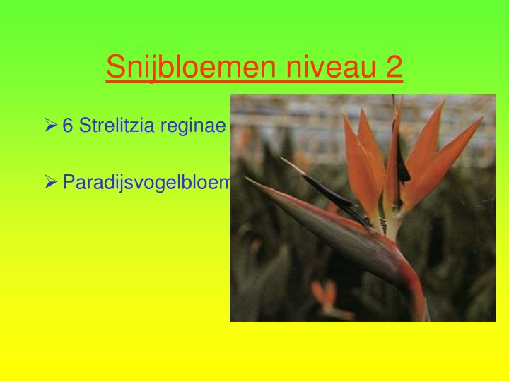 6 Strelitzia reginae
