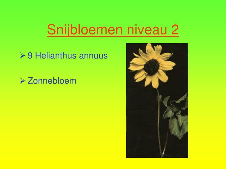 9 Helianthus annuus