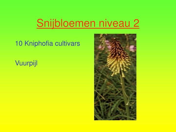 10 Kniphofia cultivars