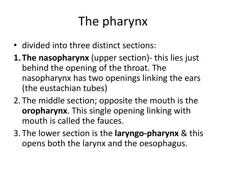 The pharynx