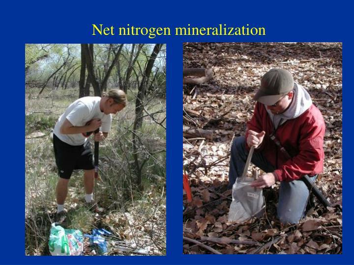 Net nitrogen mineralization
