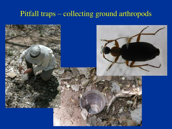 Pitfall traps – collecting ground arthropods