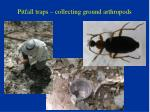 pitfall traps collecting ground arthropods