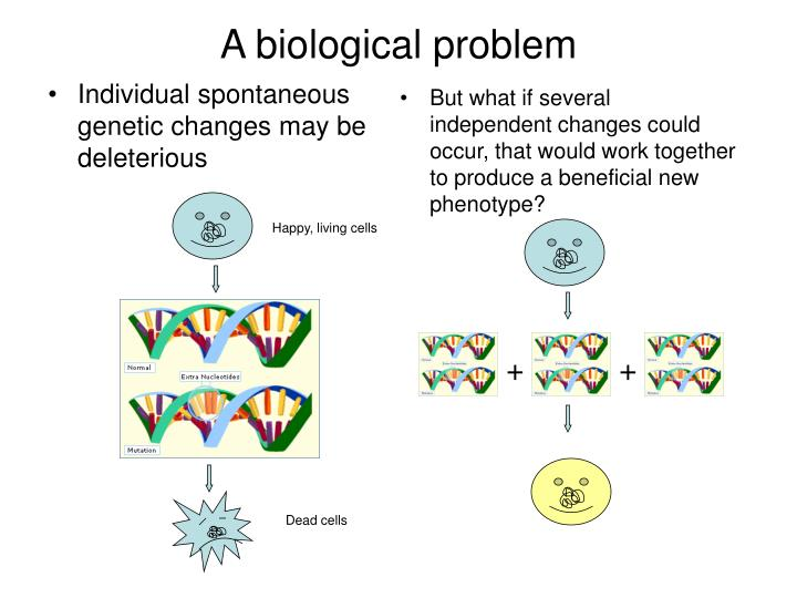 Individual spontaneous genetic changes may be deleterious