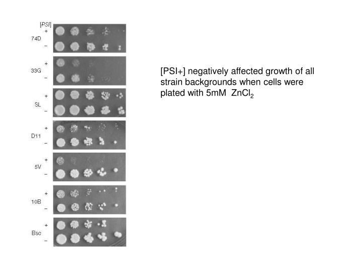 [PSI+] negatively affected growth of all strain backgrounds when cells were plated with 5mM  ZnCl