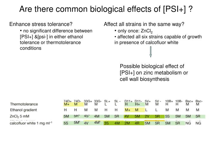 Are there common biological effects of [PSI+] ?