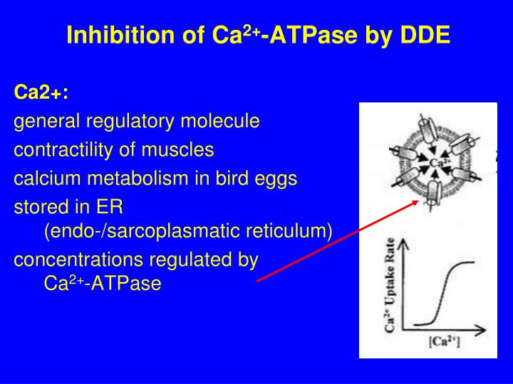 Inhibition of Ca