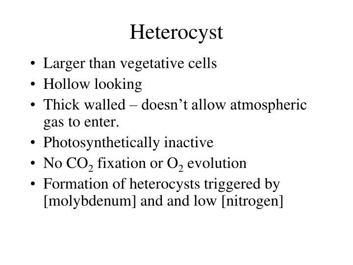 Heterocyst