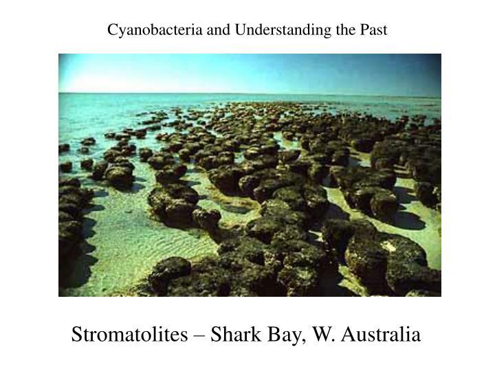 Cyanobacteria and Understanding the Past