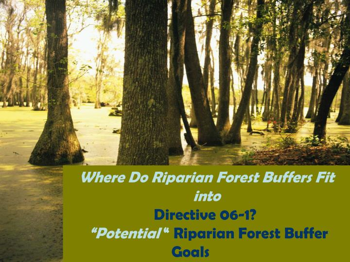 Where Do Riparian Forest Buffers Fit into