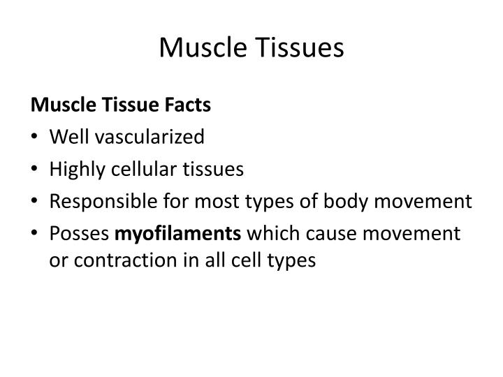 Muscle Tissues