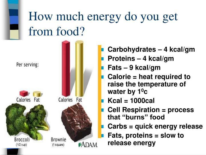 How much energy do you get from food?