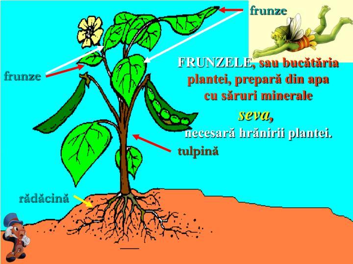 frunze
