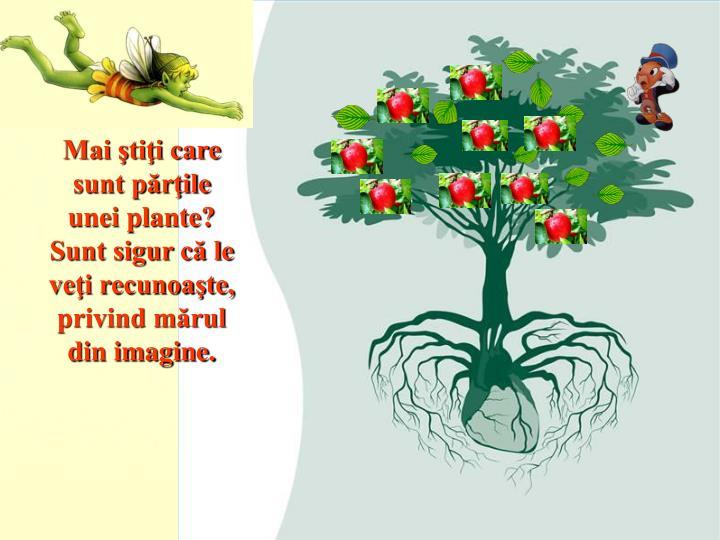 Mai ştiţi care sunt părţile unei plante?