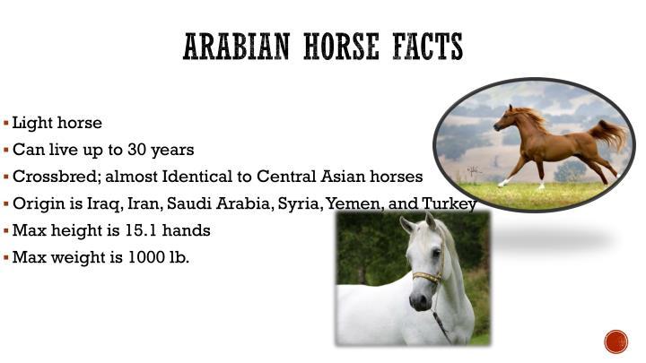 Arabian horse facts